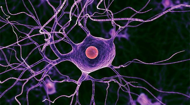 Ученые обнаружили способ восстановления нервных клеток
