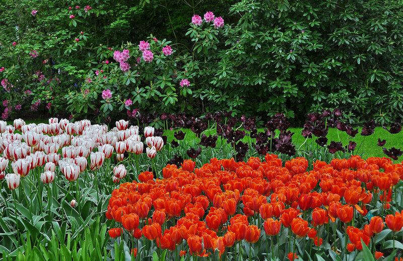 Весеннее разноцветье