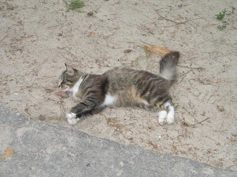 Кошка из Орловского Полесья