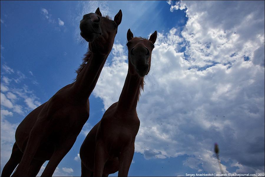 Лошади глазами муравья