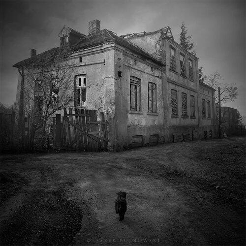 Фотограф Leszek Bujnowski