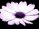 «Violet_Surprise» 0_64089_dba05cc6_S