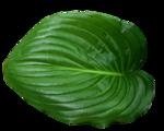 «садовый фэн-шуй» 0_65d46_b6cf95e3_S