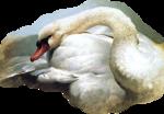 Птицы  разные  0_65dc2_9f117ecf_S