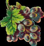 Виноград  0_6633d_f303908c_S
