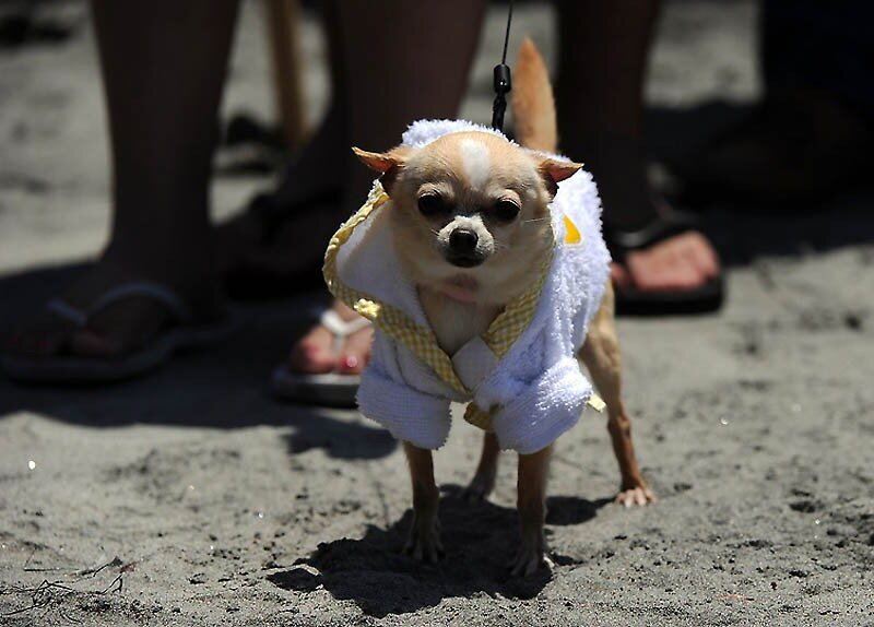 US-FEATURE-SURF-DOG