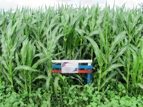 Написано соя - на деле вышло, что кукуруза
