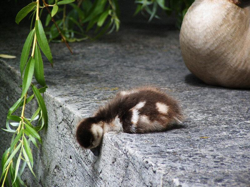 Зверюшки которые любят поспать.