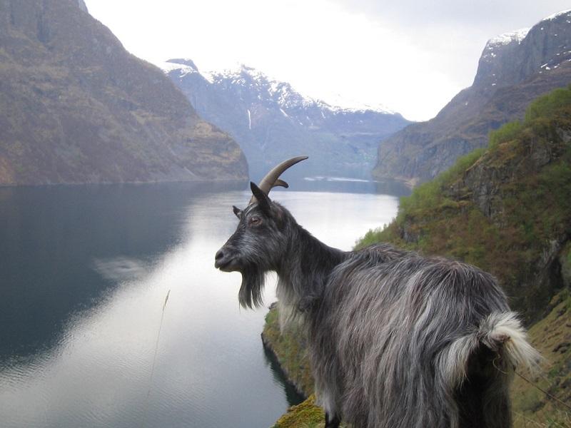 7-Гейрангер-фьорд в Норвегии.jpg