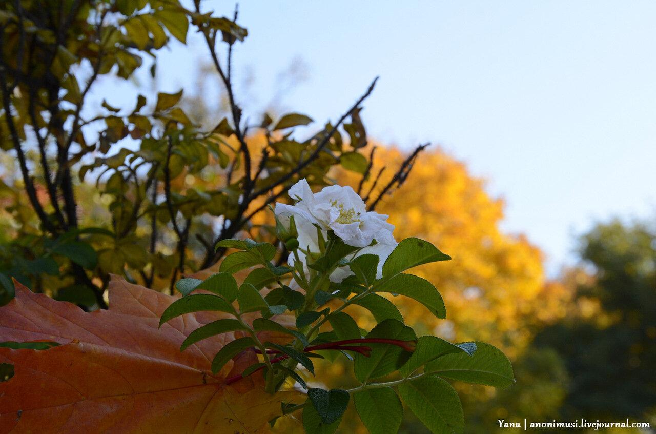 Цветы осенние. Гомель