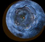«черничные ночи» 0_6a55a_7b4c99c9_S
