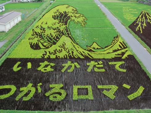 mith Рисовые кусты разных цветов произрастают так, что постепенно наполе вырисовываются изображения