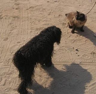 Ластик и собака 1.jpg