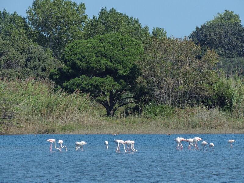 розовые фламинго на озере Кориссион (Korission) - (юго-запад острова)