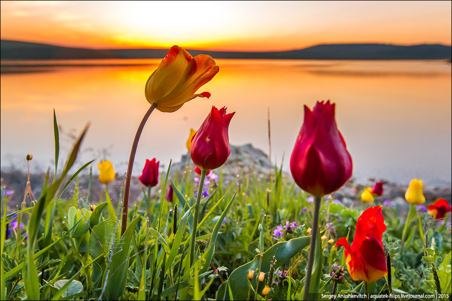 Купить тюльпаны крым подарки мужчине екатеринбург подарок 14 p=17