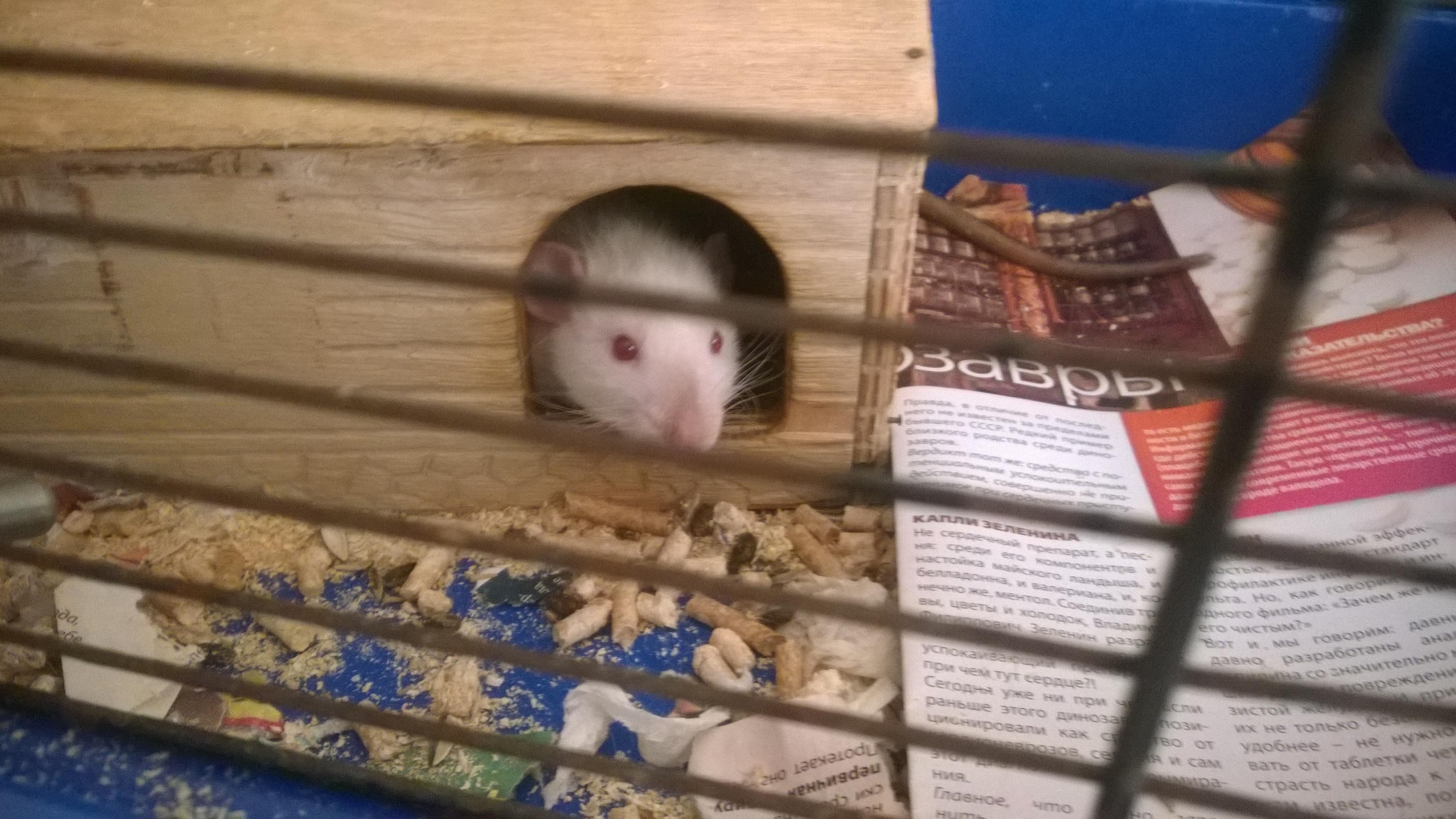 Крысята (5).jpg
