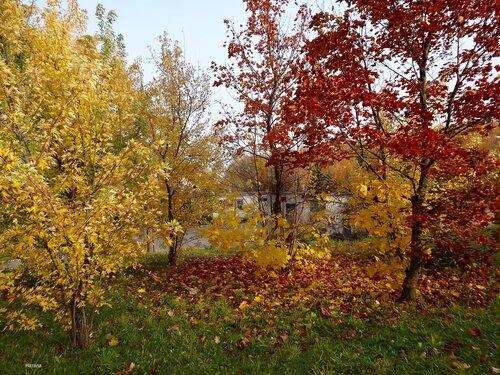 Осенний художник раскрасил