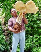 сыроедение грибы_syroedenie griby