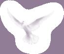 голуби 2.png