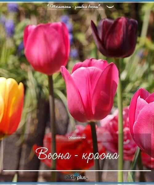 Весенние цветы 07