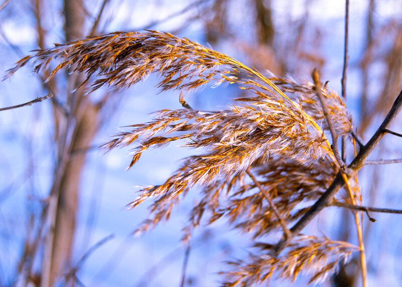 Зимняя ботаника