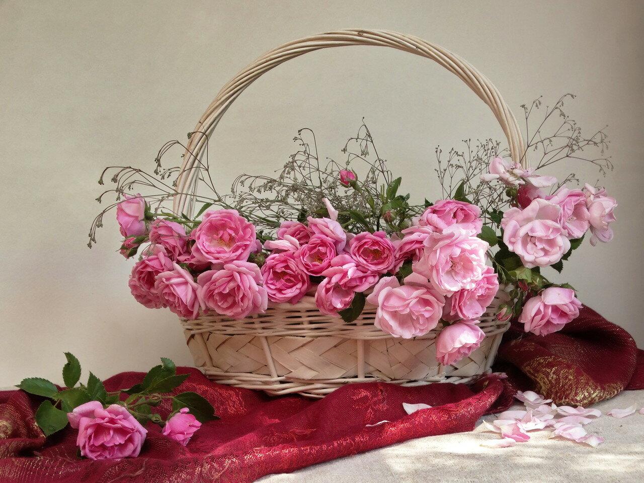 Прекрасной розы аромат вдыхаю