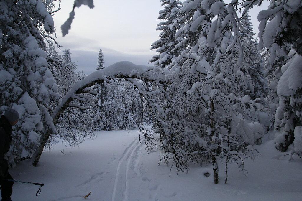 Лыжня на Уреньге