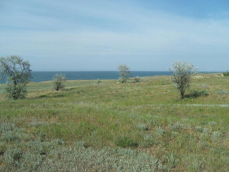 деревца в степи у Азовского моря
