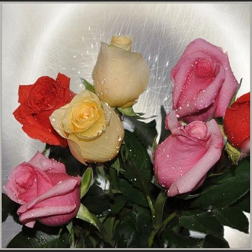 Открытки. С днем социального работника. Разноцветные розы