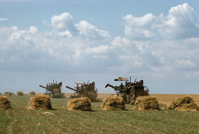 Combine Harvesters at Work in a Wheat Field