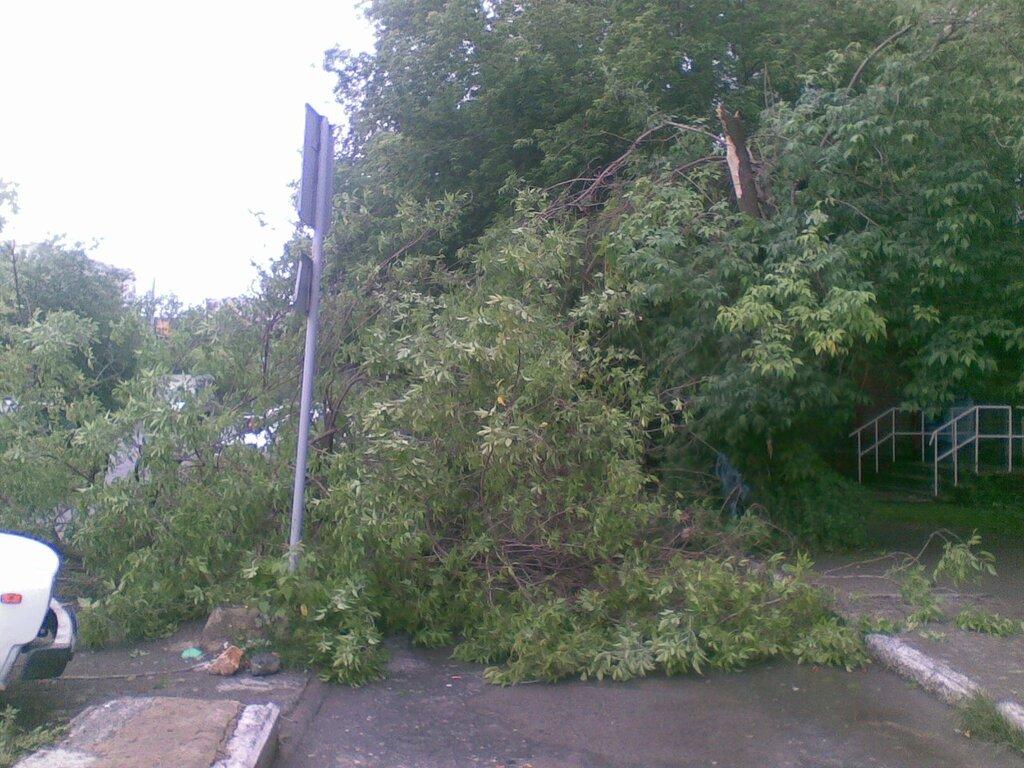 Город Златоуст. Сломаное грозой дерево
