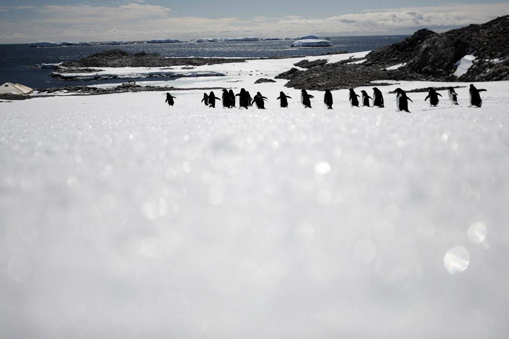 20. Красивый айсберг вблизи станции Палмер. (Фото Robin Solfisburg | National Science Foundation):