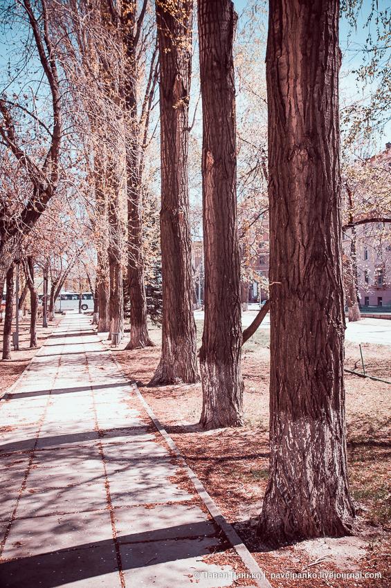 парк деревья волгоград volgograd pavelpanko