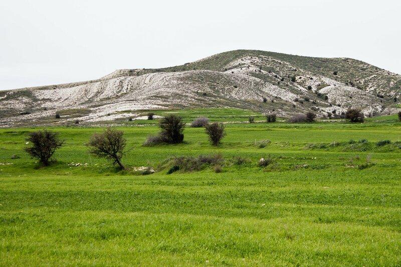 белые холмы за Ларнакой