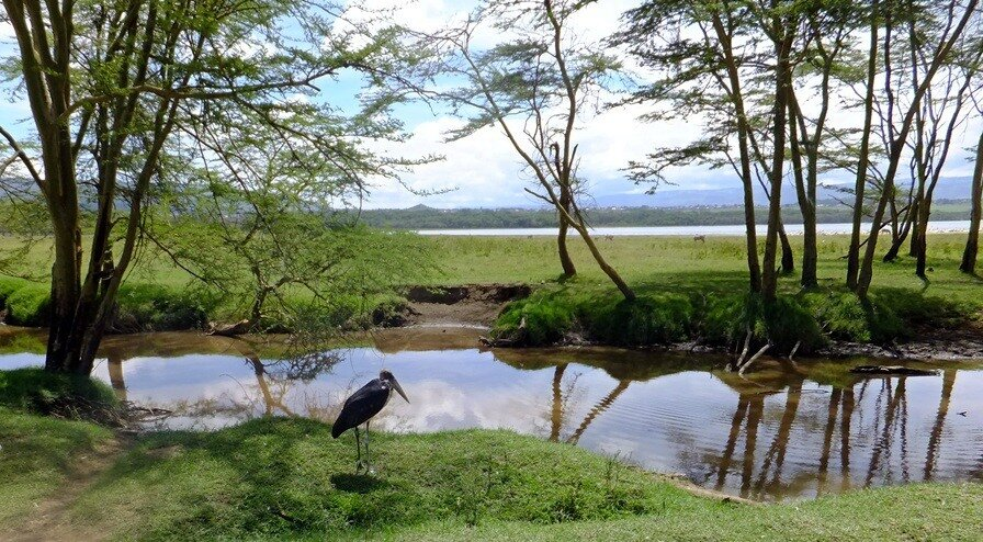 Пейзаж с марабу
