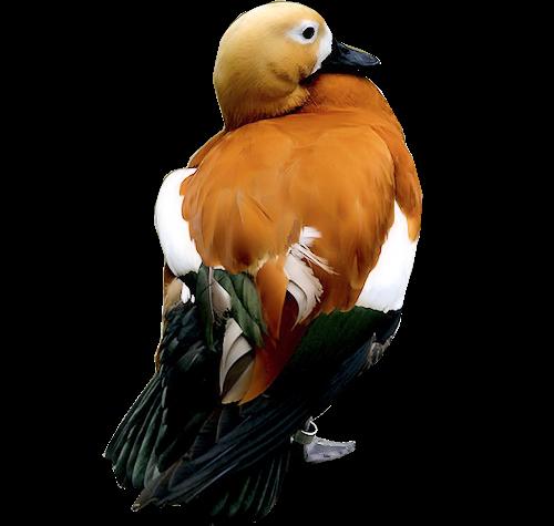 Ptice..... 0_85537_8c33226a_L
