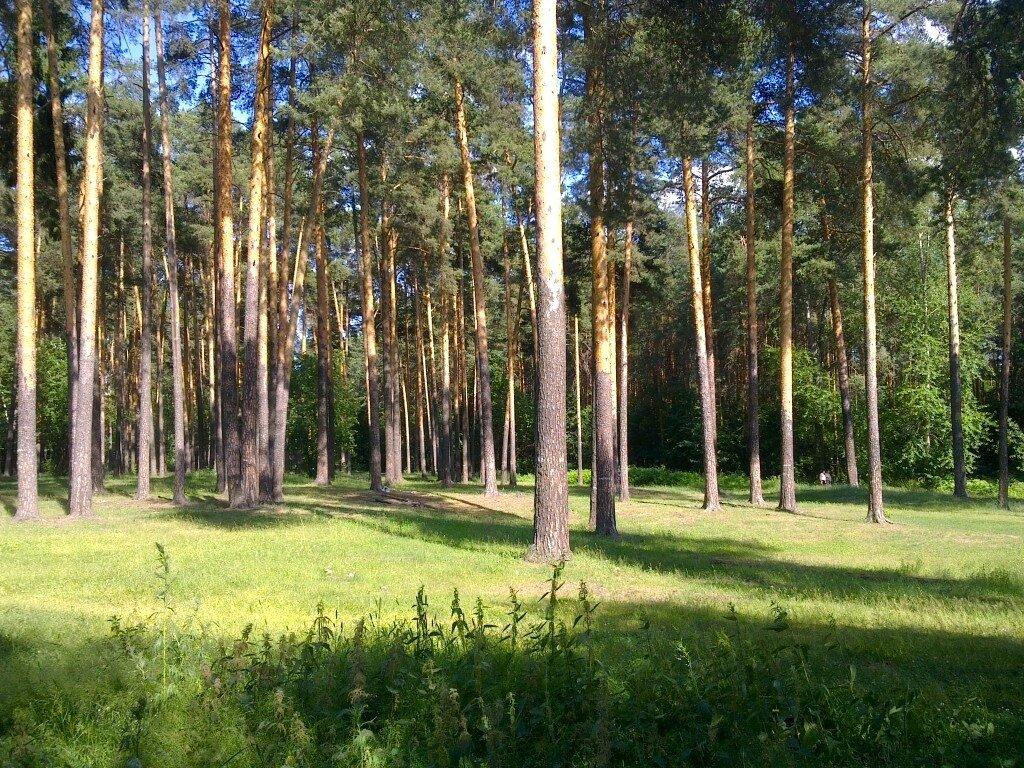 Фото черняевского леса пермь