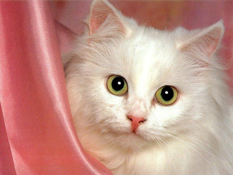 Аватары кошек , котов, котят 110x100 - Avatarku.ru.