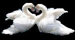 Птицы  разные  0_65dc7_e2ae4d1c_S