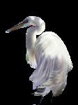 Аист,цыплята,павлин. 0_65e53_e9709419_S
