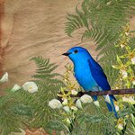 «птицы наблюдают часами»  0_676fd_dceec0fb_S