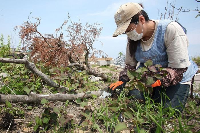Япония – три месяца после катастрофы