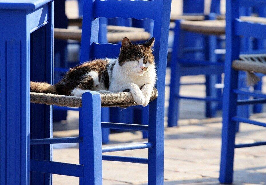 греческие кошки картинки оформление фотографий монтаж