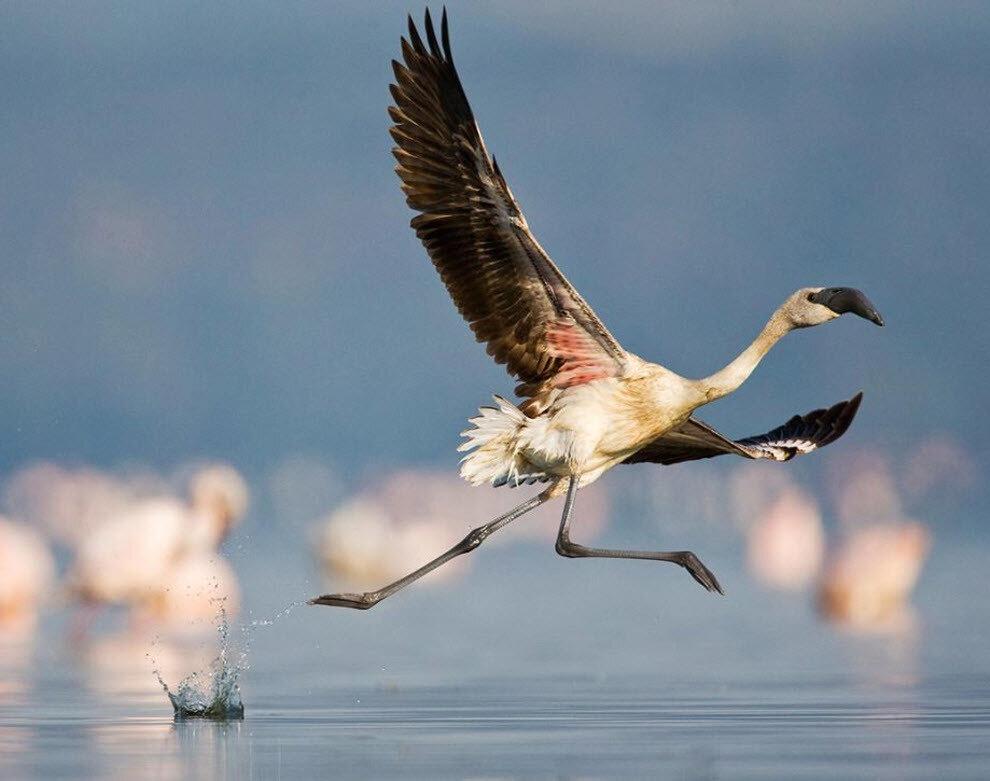 Фото красивых орлов птиц сегодня