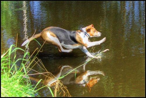 Бег по воде.
