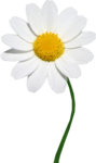 flower002.png