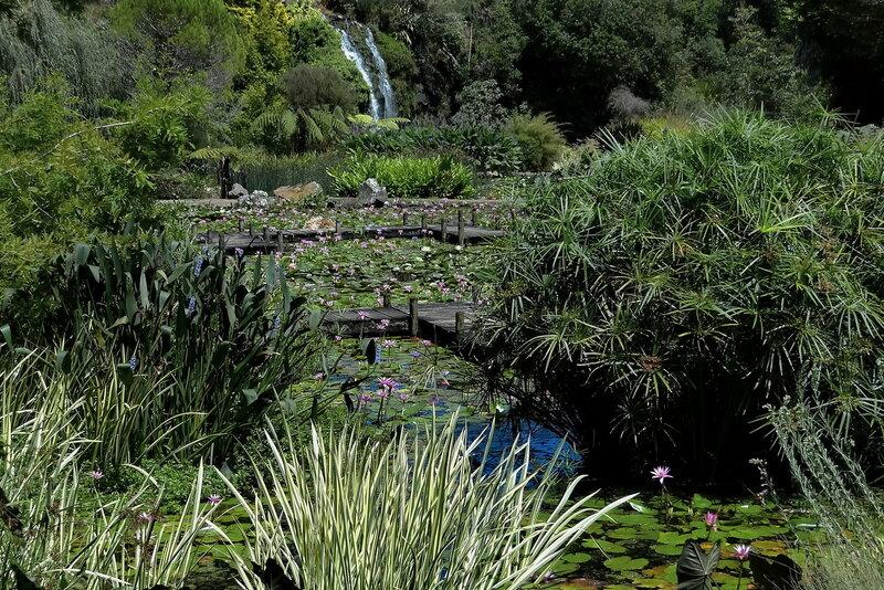 В парке водных растений