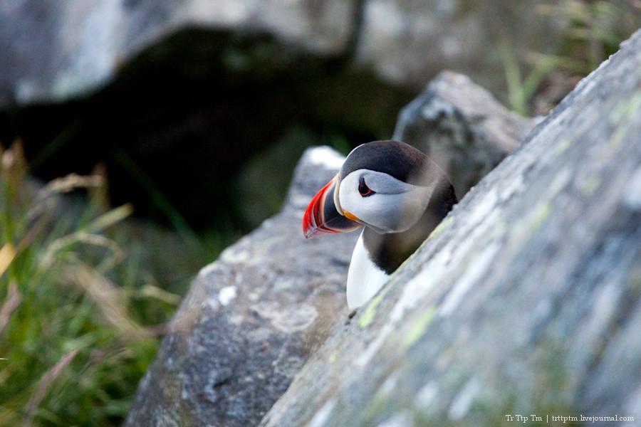 Птицы острова Рунде.