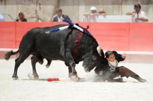 Девушка матадор отрубила быку уши