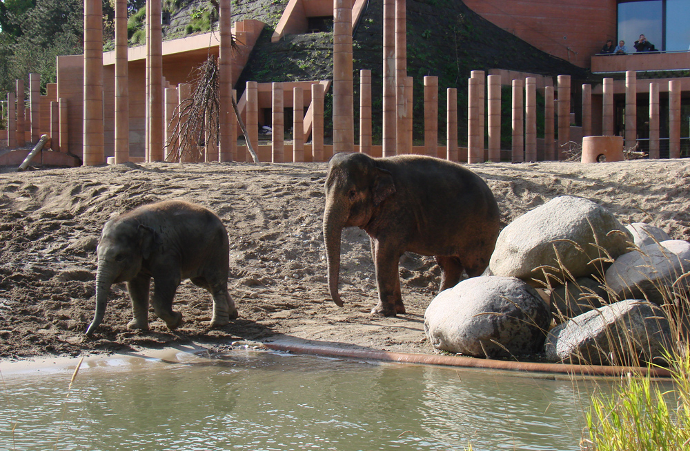Elephants_Zoo_Copenhagen.jpg